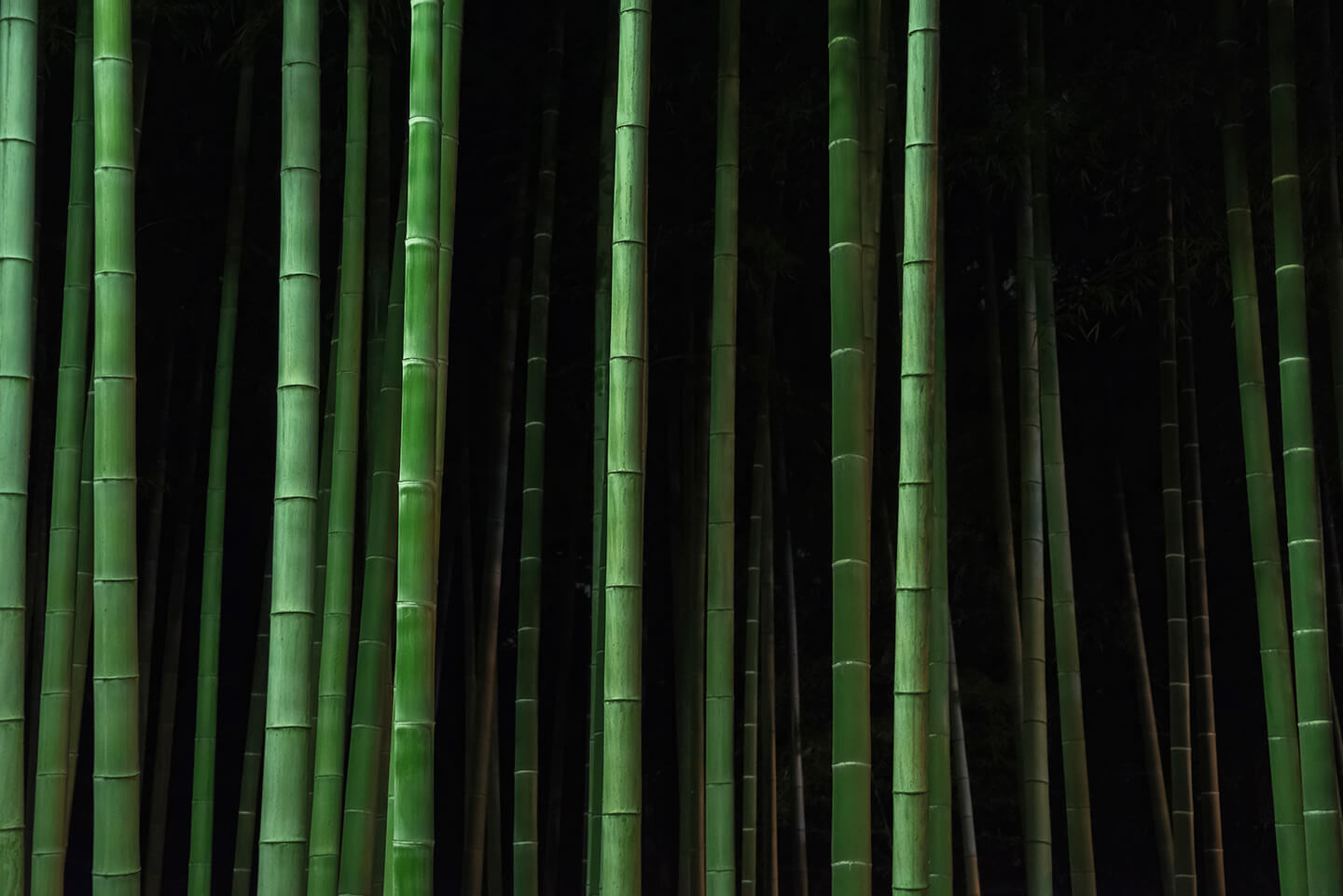 A lively green bamboo forest.