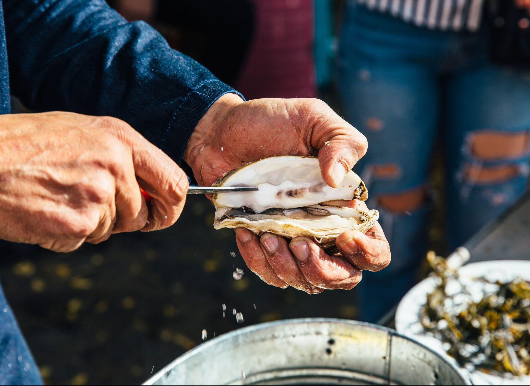 Strong hands expertly shucking fresh oysters.