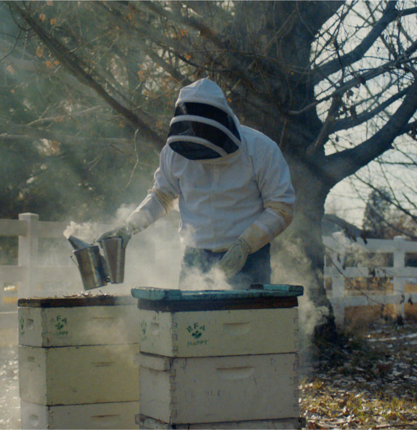 A beekeeper gently smoking out the hives.