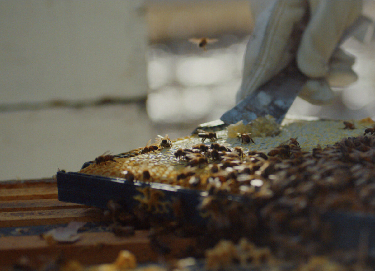A person scraping the honey and honeycombs out of a honey frame.