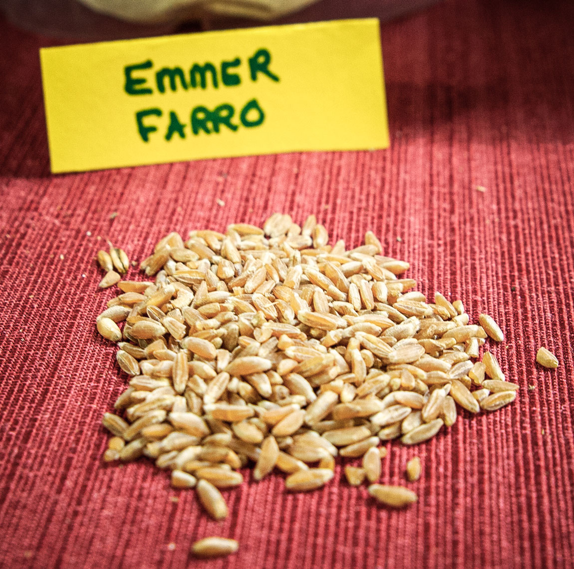 A small pile of Emmer Farro grain.
