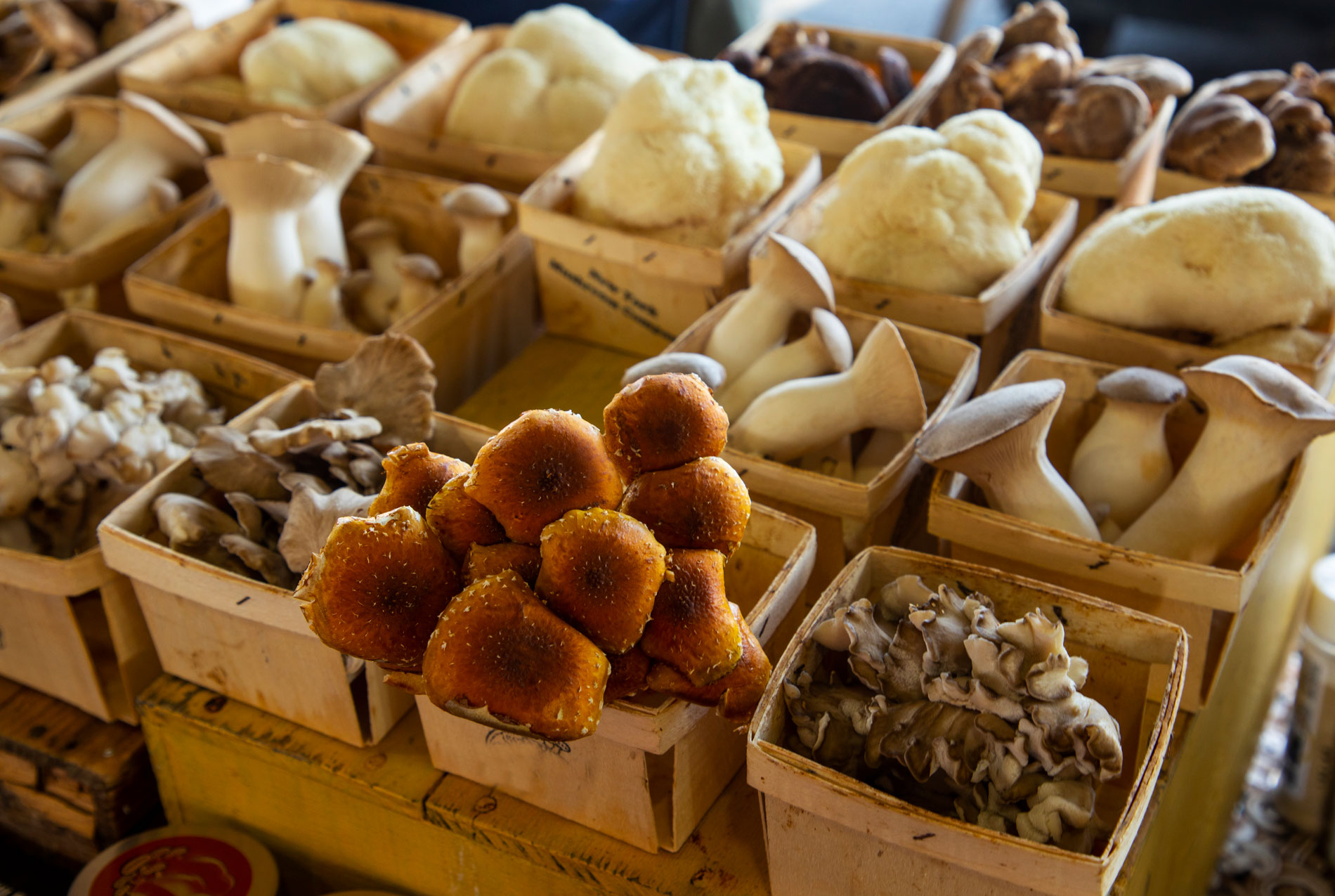 A variety of mushrooms set about in their own individual boxes.