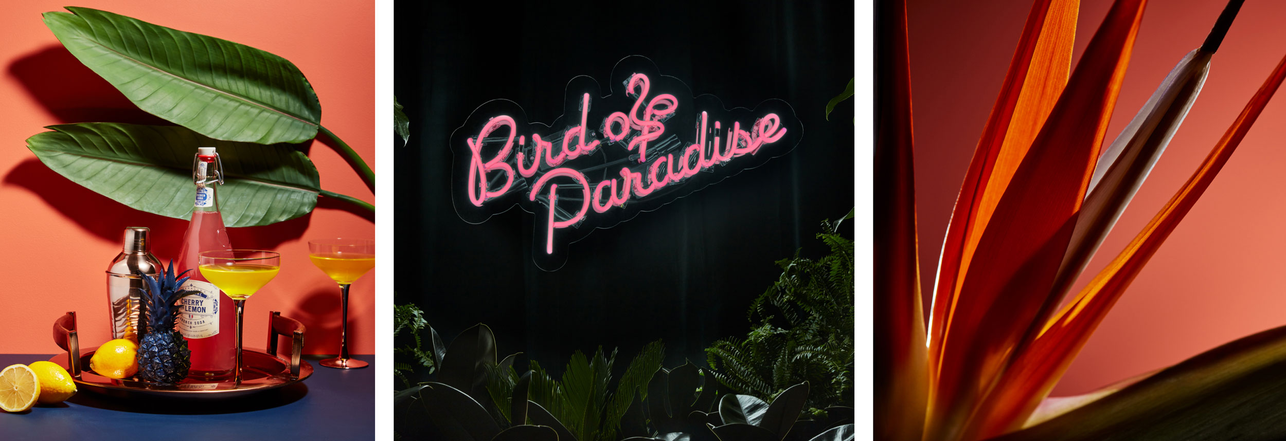 A moodboard of a vibrant cocktail mix, a neon sign and close up of a tropical plant.