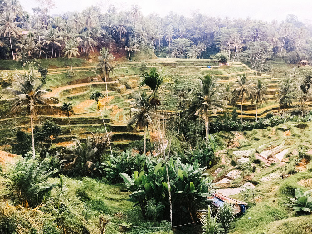 The vibrant, green lands of Indonesia.