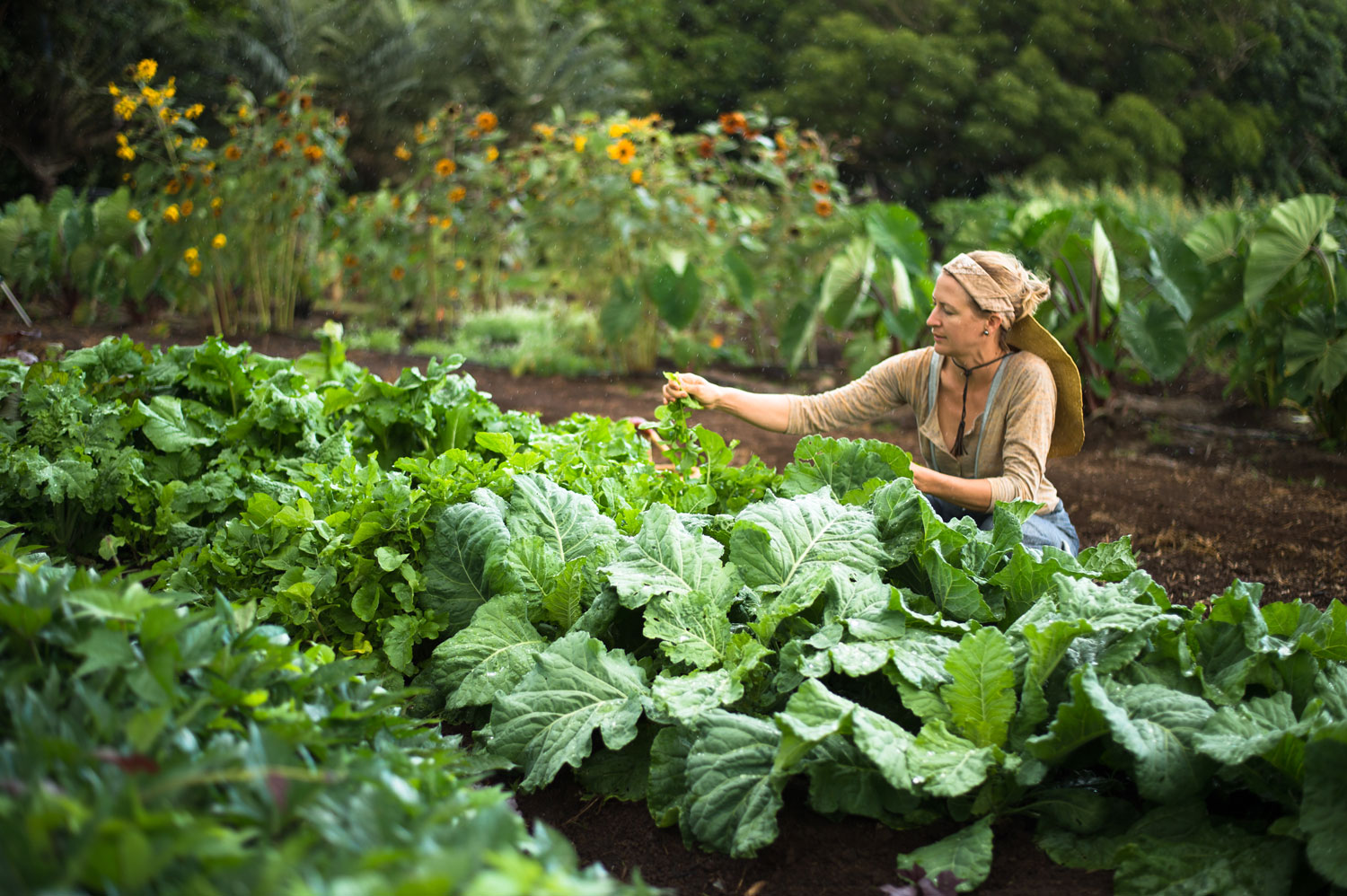 A person tending to plants in a large garden.