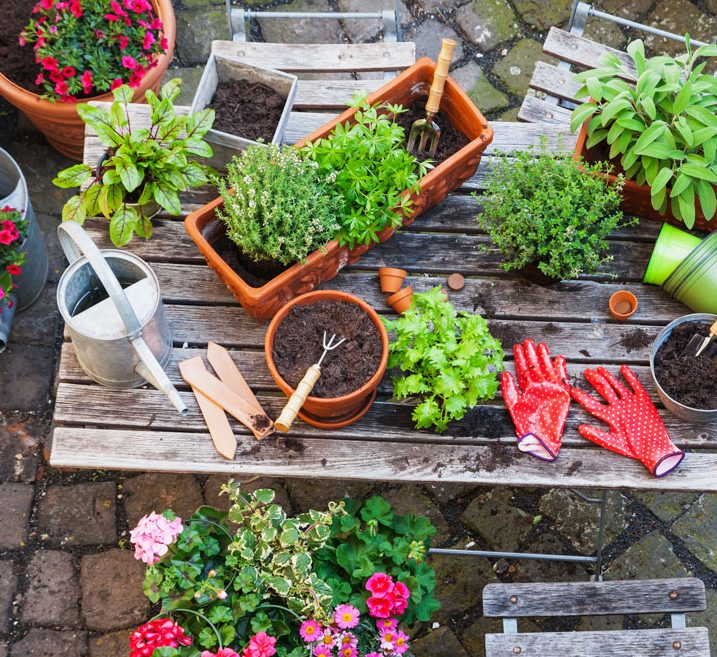 A variety of garden tools, pots and plants resting on a wooden table.