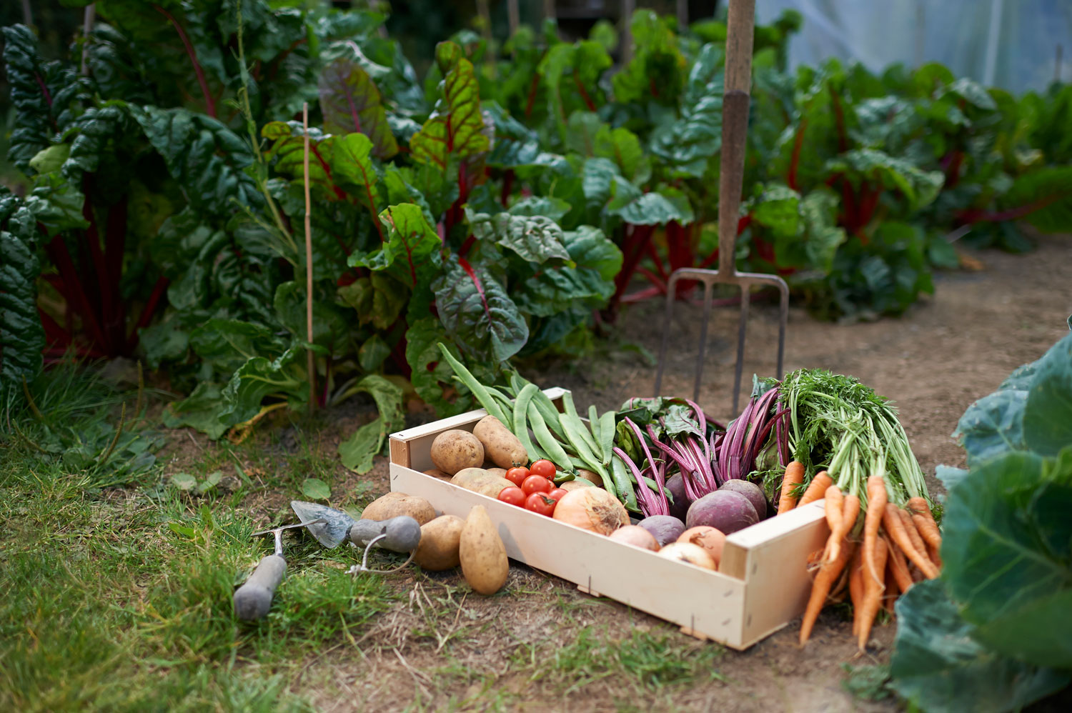 A wooden box filled with freshly picked vegetables from the garden.