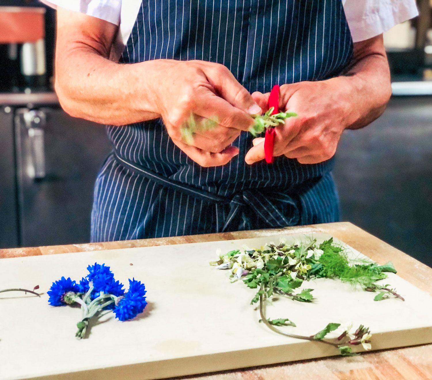 A chef gently trimming the flowers off of cilantro.