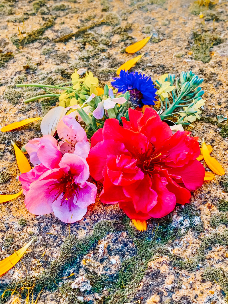 A variety of hand-picked flowers resting on the ground.