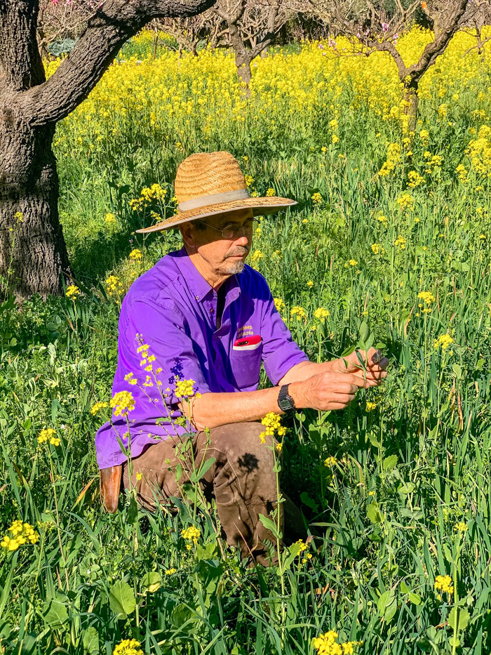 Peter Jacobsen examining flowers in a field.