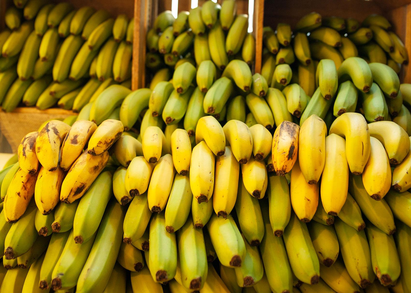 Seemingly endless bundles of yellow bananas.