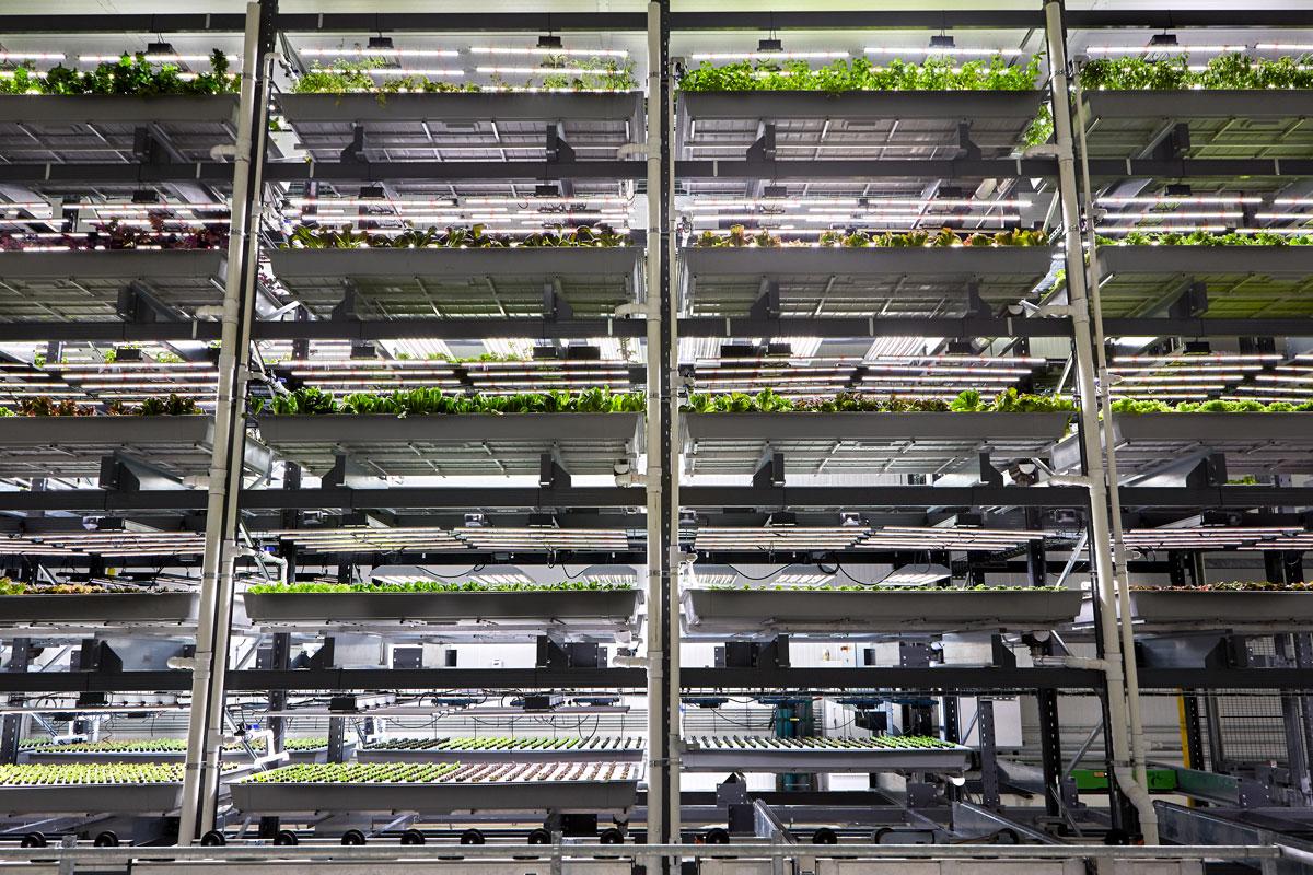 Nursery plants growing in separted shelving units.