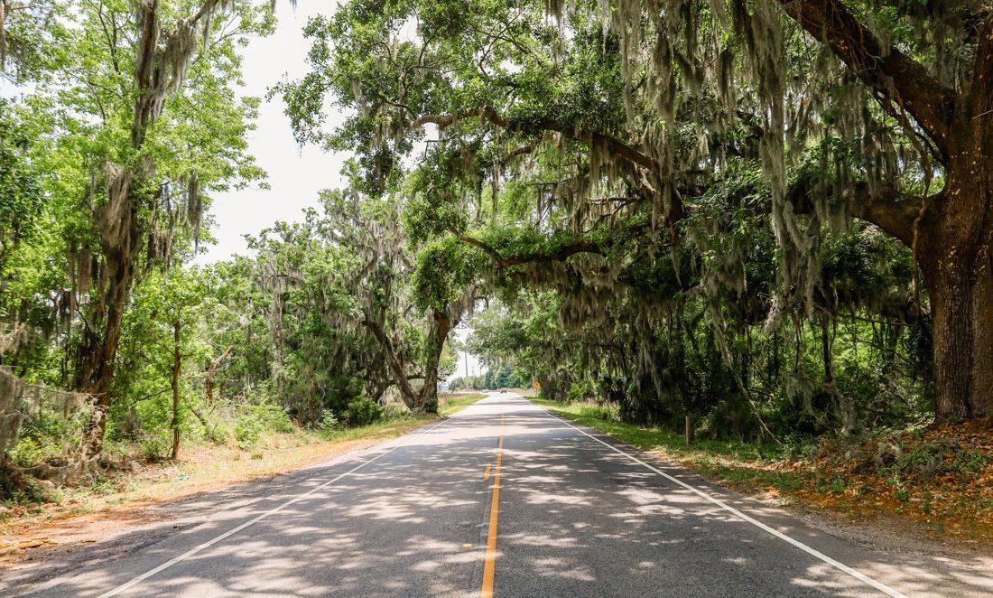 A tree-dense street of Charleston.