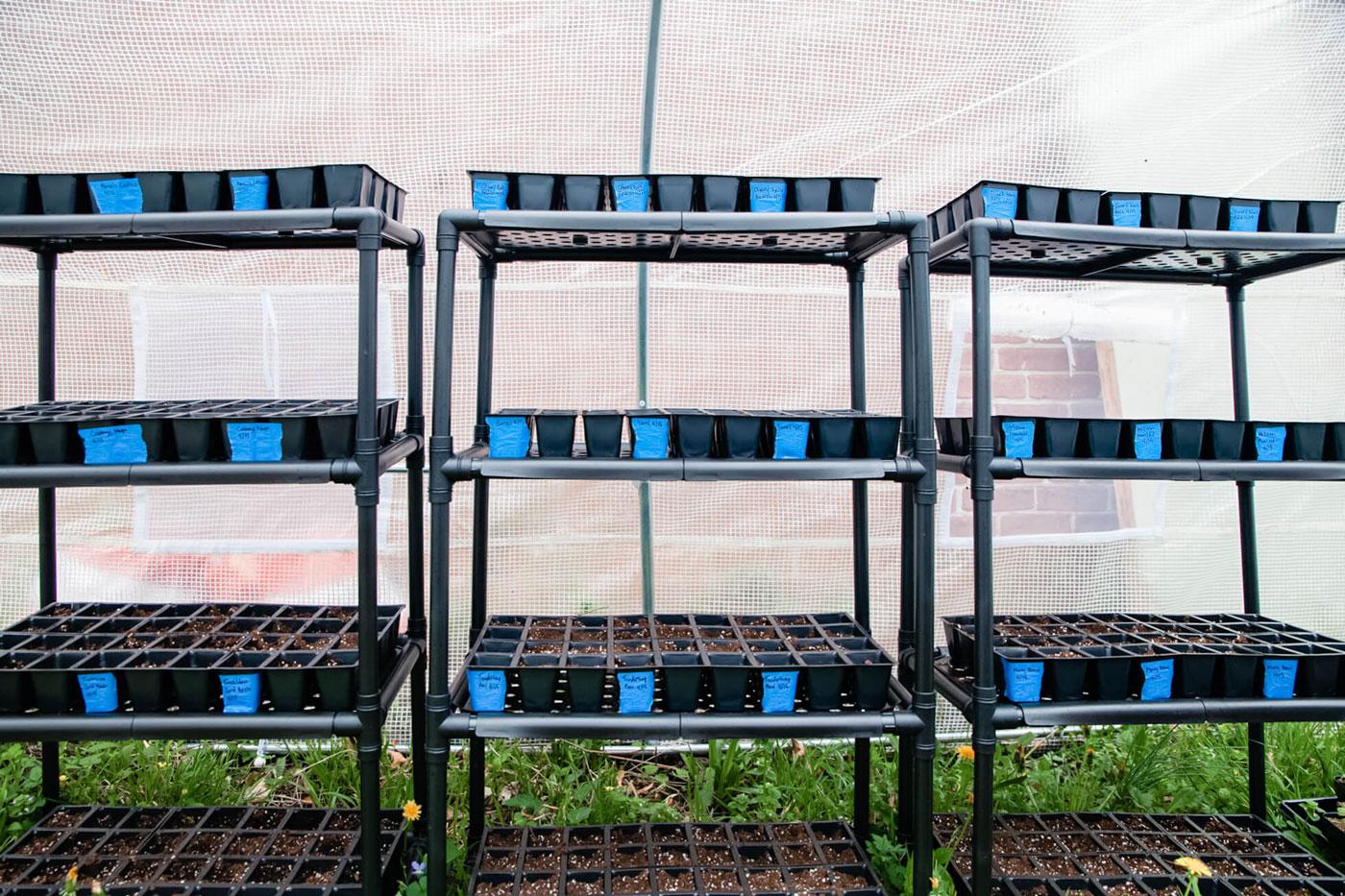Black trays of nursery plants growing.