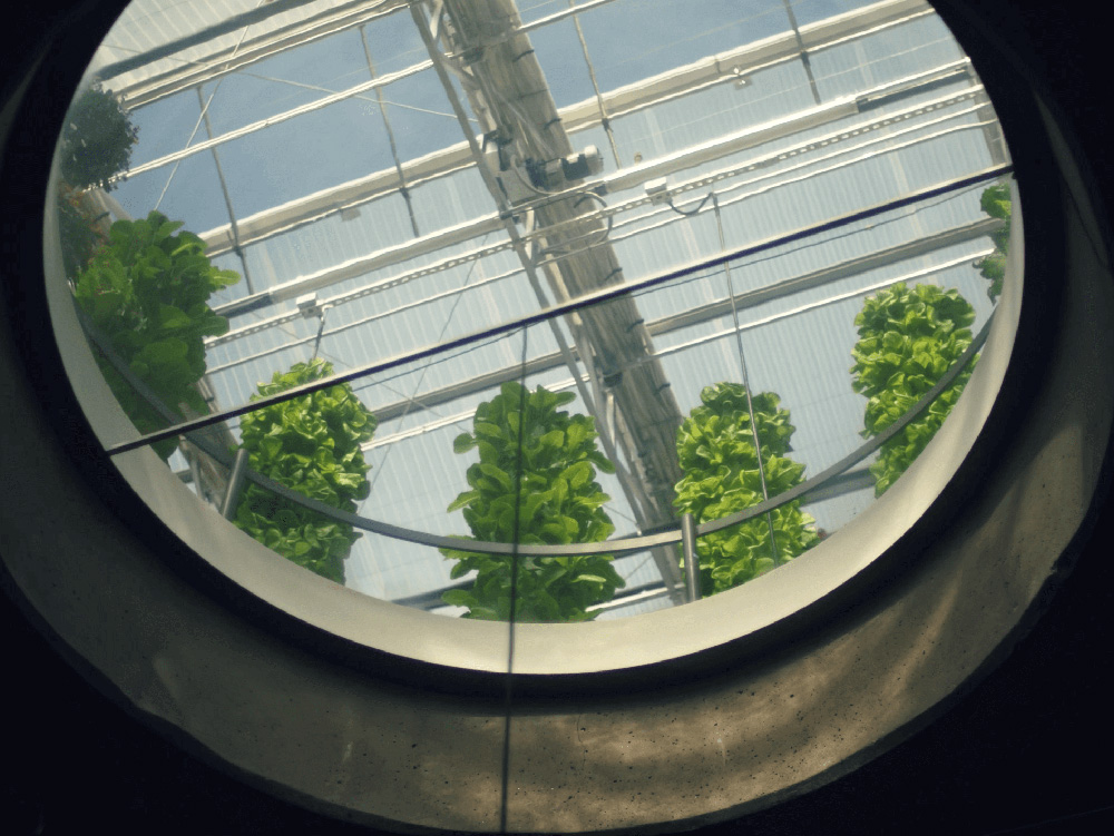 A window leading into the greenhouse of Uchi.