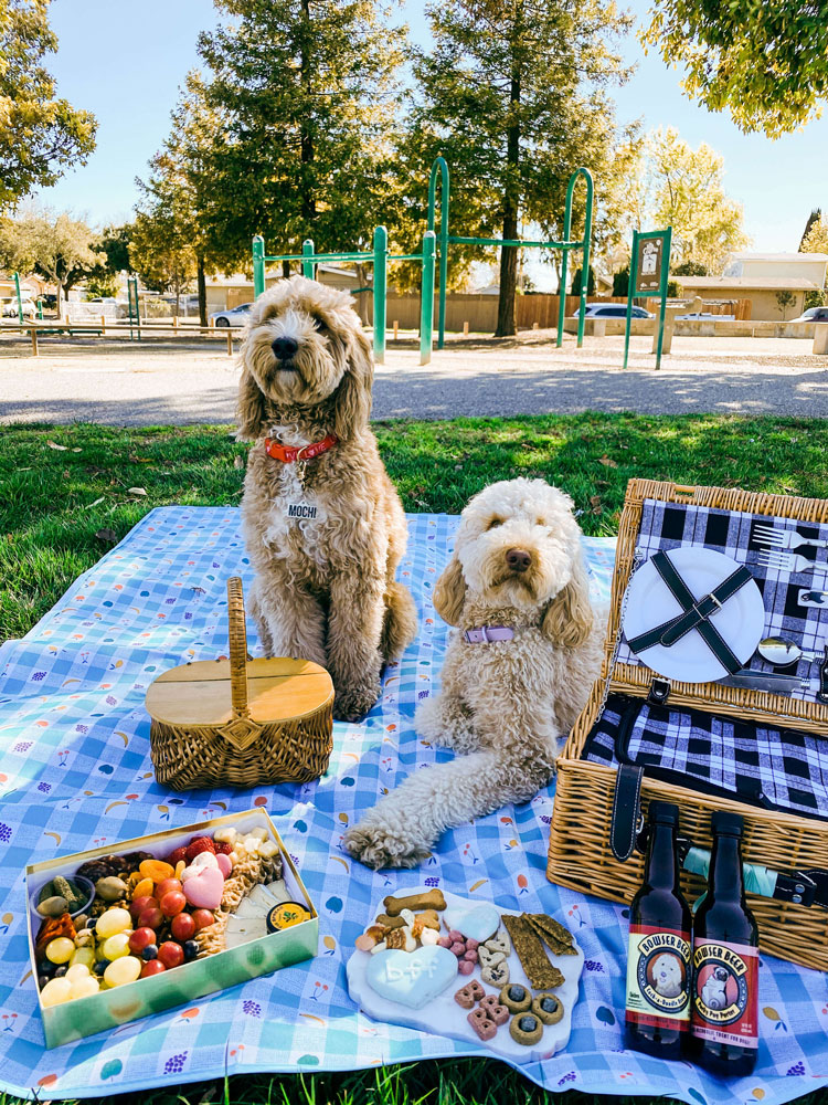 Two dogs resting on a picnic blanket.