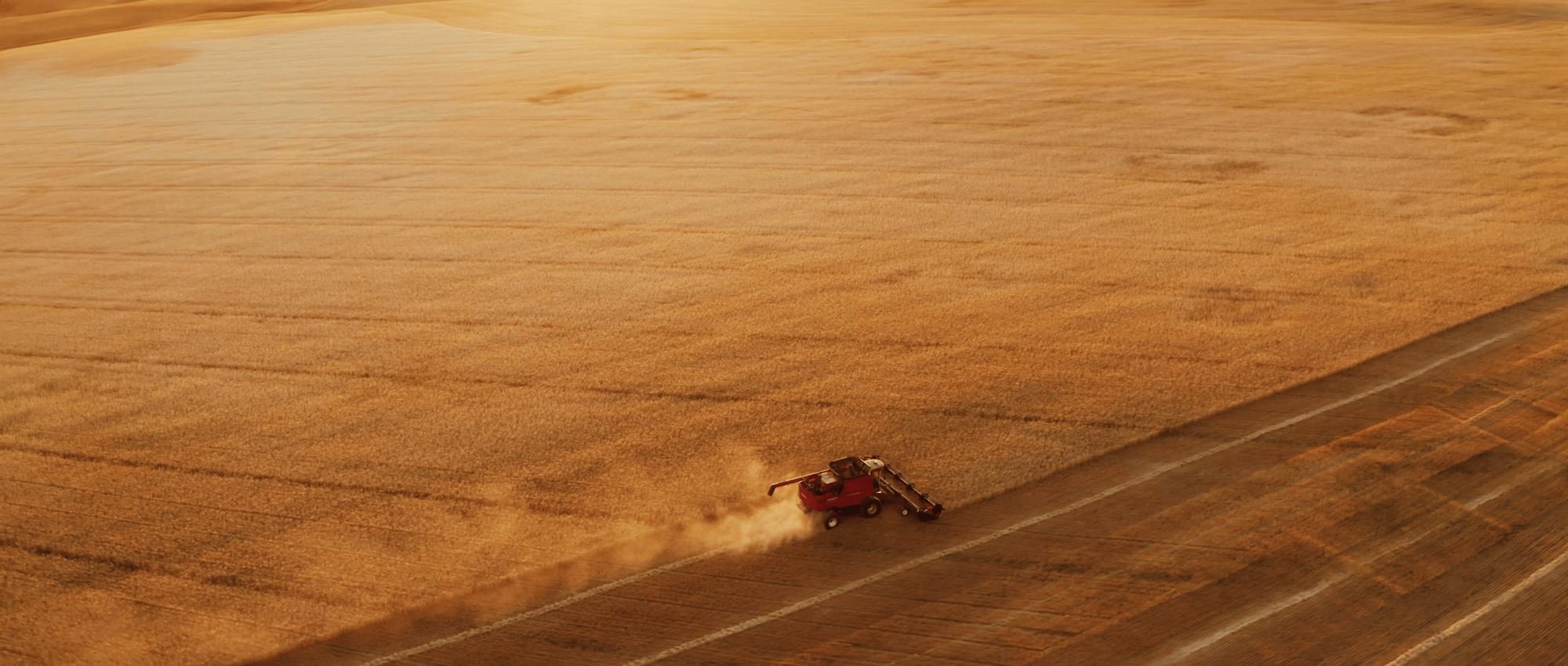 The organic wheat fields of Big Sandy, Montana.